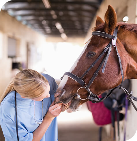 Equine Dental | Aireworth Vets