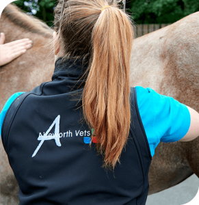 Artificial Insemination | Equine Services | Aireworth Vets