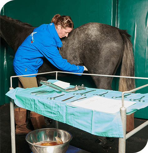 Castration | Equine Services | Aireworth Vets