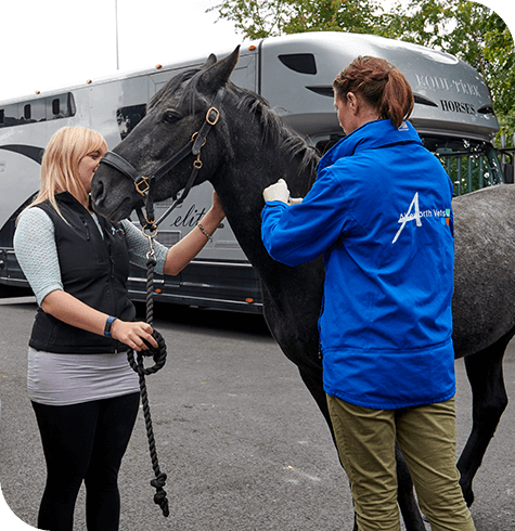 Equine Vaccinations | Aireworth Vets
