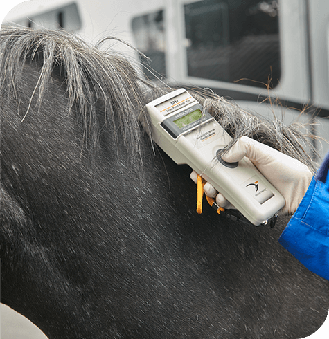 Identification | Equine Services | Aireworth Vets