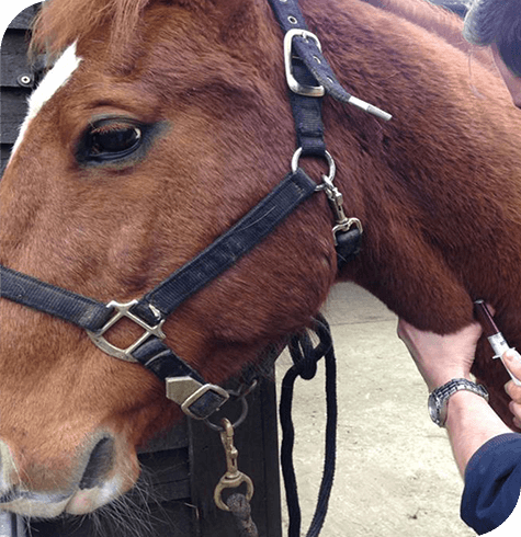 Zone Visits | Equine Services | Aireworth Vets